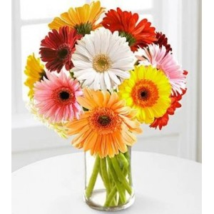 Mixed Gerbera Bunch Best Gift To Mother