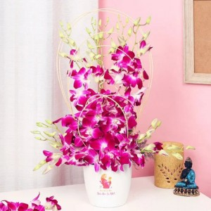Hued With Love Orchids