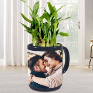 2 LAYER LUCKY BAMBOO TREE IN PERSONALIZED MUG