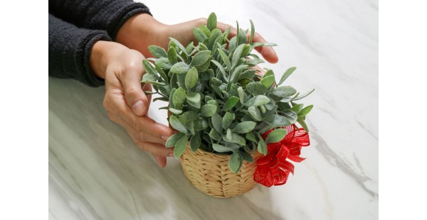 Why Choose Plants As gifts?